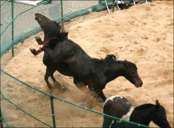 交尾 馬 競馬 の